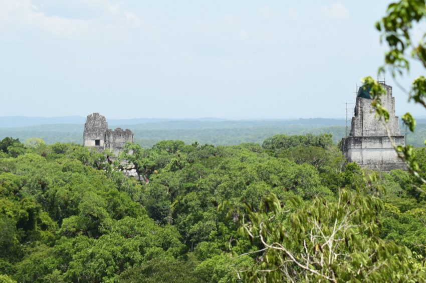 a look at the some of temples standing out of the jungle canopy on the belize tikal day tour