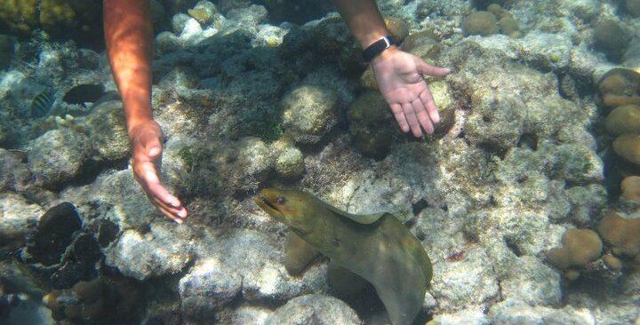 mexico rock snorkeling san pedro belize