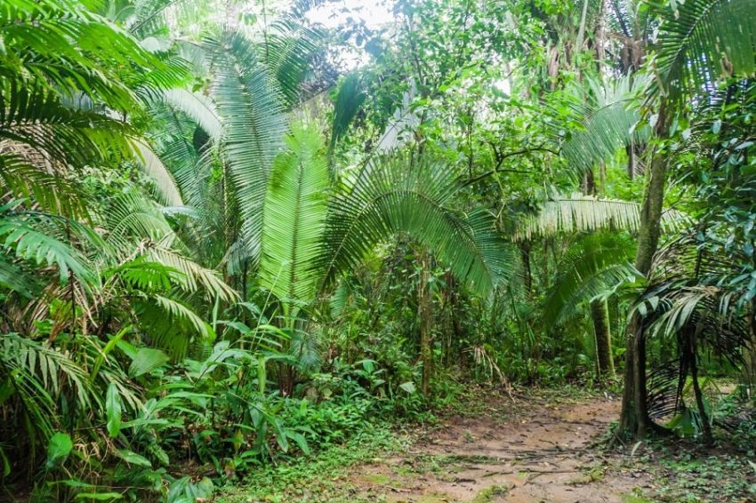 view of the trail in cockscomb basin in southern belize
